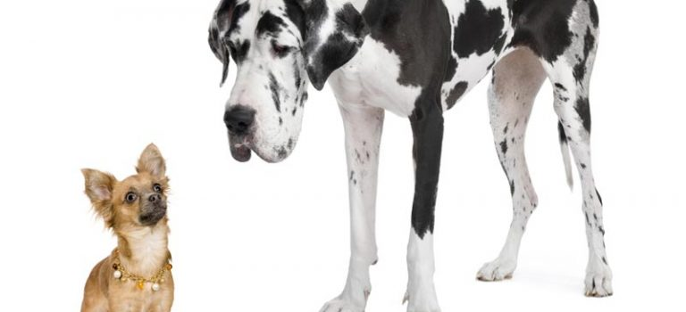"""Sindrom Malog Psa"""