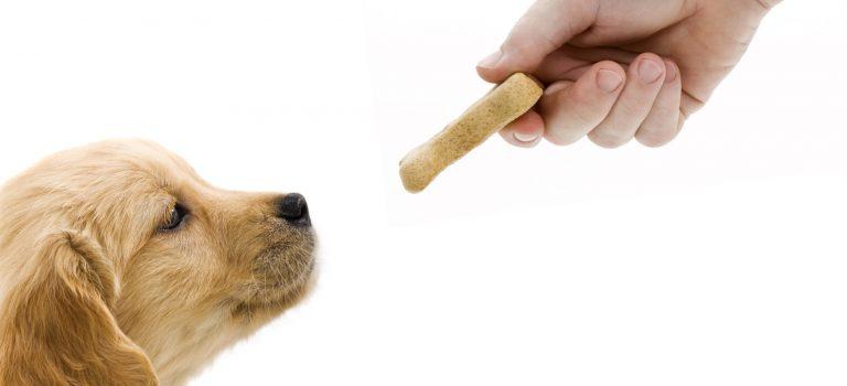 Rad s psom